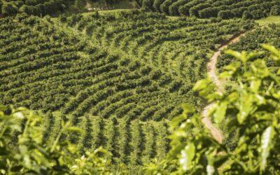 8 gyönyörű kávéültetvény: innen érkezik reggeleink fénypontja